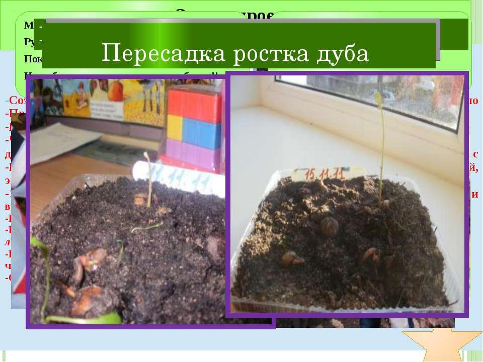 Измеряем высоту дубочков