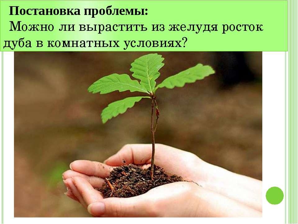 Постановка проблемы: Можно ли вырастить из желудя росток дуба в комнатных усл...