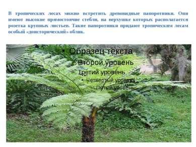 В тропических лесах можно встретить древовидные папоротники. Они имеют высоки...