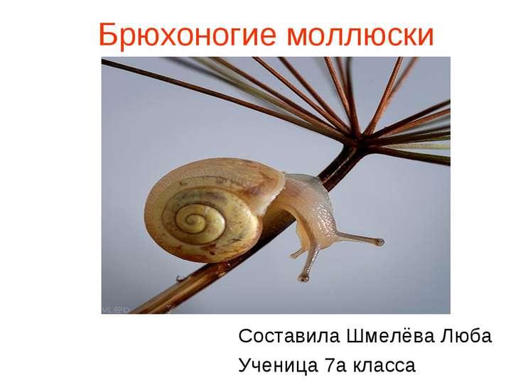 Брюхоногие моллюски Составила Шмелёва Люба Ученица 7а класса