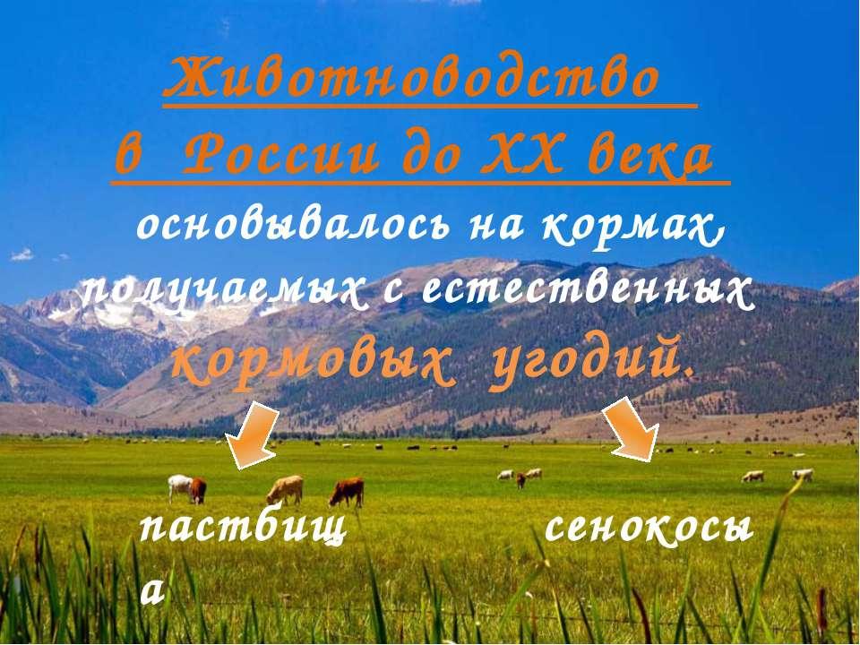 Животноводство в России до ХХ века основывалось на кормах, получаемых с естес...