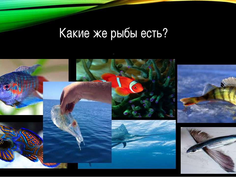 Какие же рыбы есть?