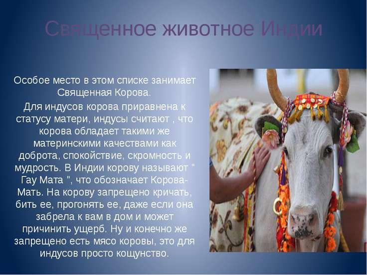 Священное животное Индии Особое место в этом списке занимает Священная Корова...
