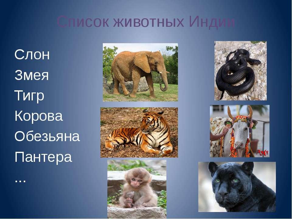 Список животных Индии Слон Змея Тигр Корова Обезьяна Пантера ...