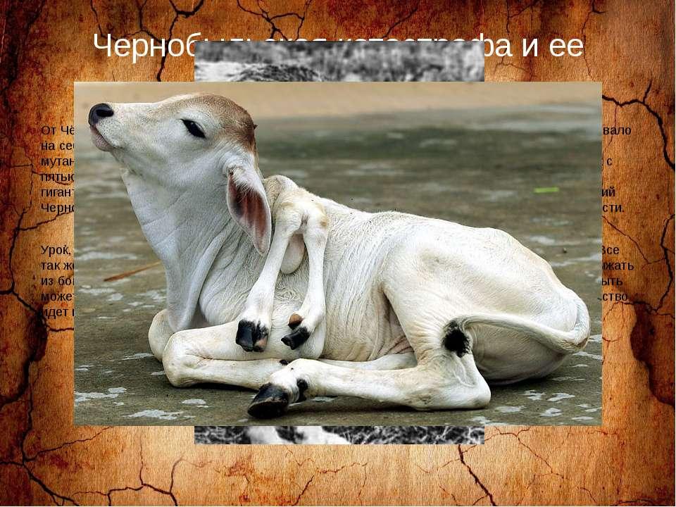 Чернобыльская катастрофа и ее последствия. От Чернобыльской катастрофы постра...