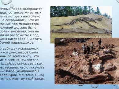 В осадочных пород содержатся миллиарды останков животных, многие из которых н...
