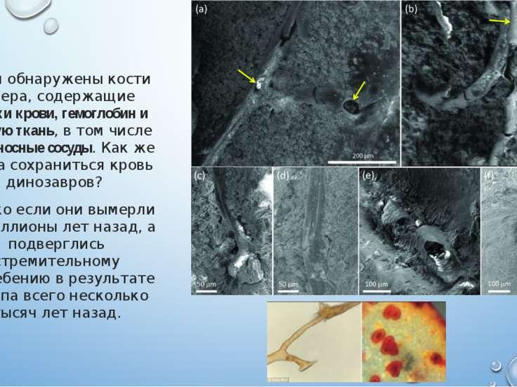Были обнаружены кости ящера, содержащие клетки крови, гемоглобин и мягкую тка...