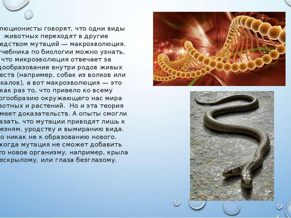 Эволюционисты говорят, что одни виды животных переходят в другие посредством ...