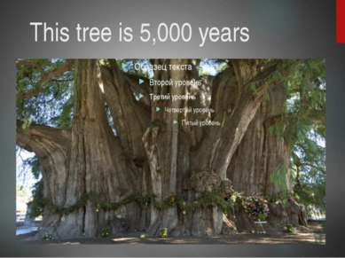 This tree is 5,000 years