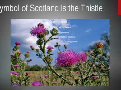 The symbol of Scotland is the Thistle