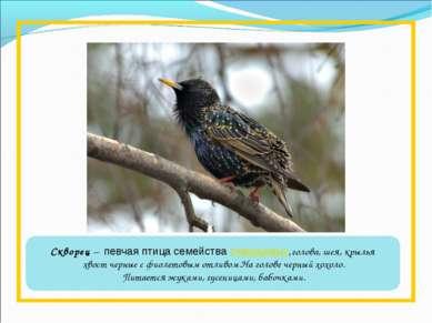 Скворец – певчая птица семействаскворцовых,голова, шея, крылья хвост черные...