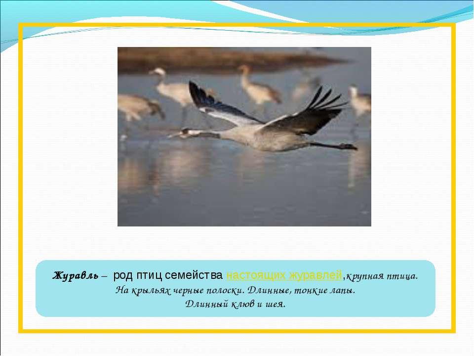 Журавль – род птиц семействанастоящих журавлей,крупная птица. На крыльях че...
