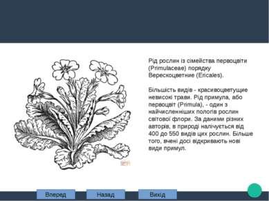 Рід рослин із сімейства первоцвіти (Primulaceae) порядку Верескоцветние (Eric...
