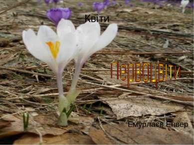 Квіти Емурлаєв Енвер