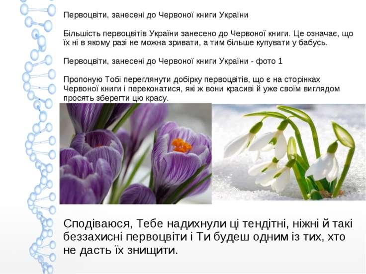 Первоцвіти, занесені до Червоної книги України Більшість первоцвітів України ...