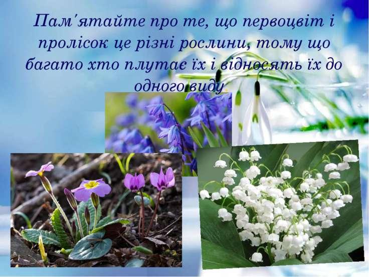 Пам'ятайте про те, що первоцвіт і пролісок це різні рослини, тому що багато х...
