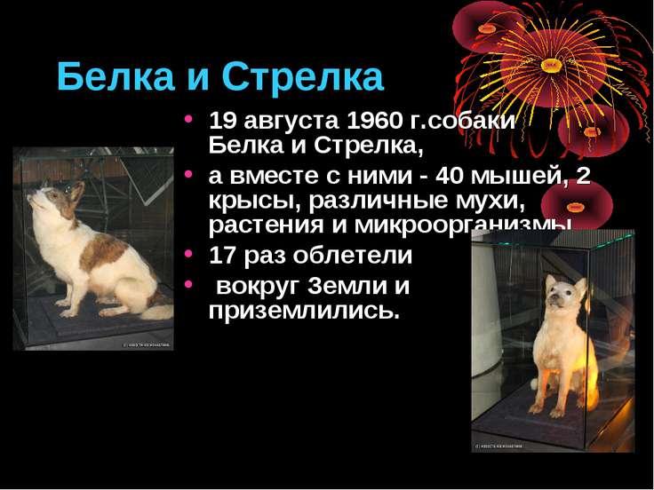 Белка и Стрелка 19 августа 1960 г.собаки Белка и Стрелка, а вместе с ними - 4...