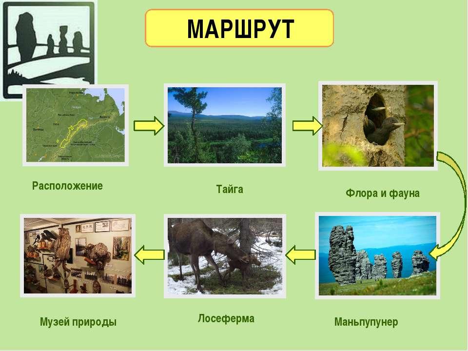 МАРШРУТ Расположение Флора и фауна Маньпупунер Музей природы Тайга Лосеферма