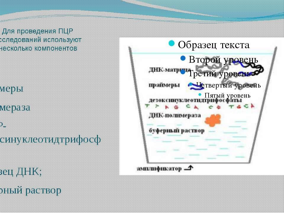 Для проведения ПЦР исследований используют несколько компонентов Праймеры Пол...