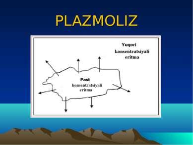 PLAZMOLIZ