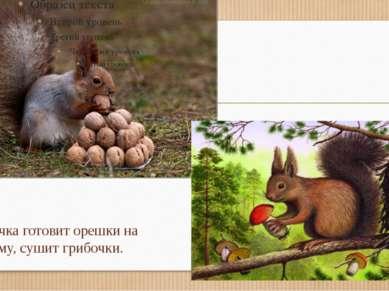 Белочка готовит орешки на зиму, сушит грибочки.