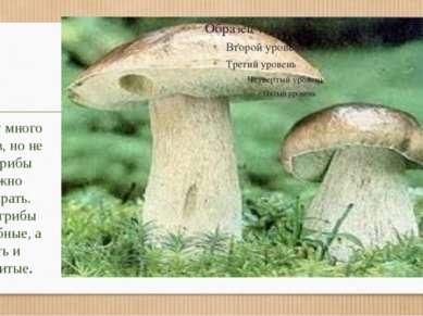В лесу много грибов, но не все грибы можно собирать. Есть грибы съедобные, а ...
