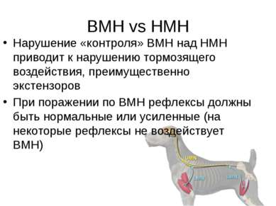 ВМН vs НМН Нарушение «контроля» ВМН над НМН приводит к нарушению тормозящего ...