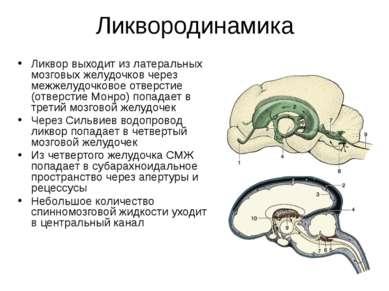 Ликвородинамика Ликвор выходит из латеральных мозговых желудочков через межже...