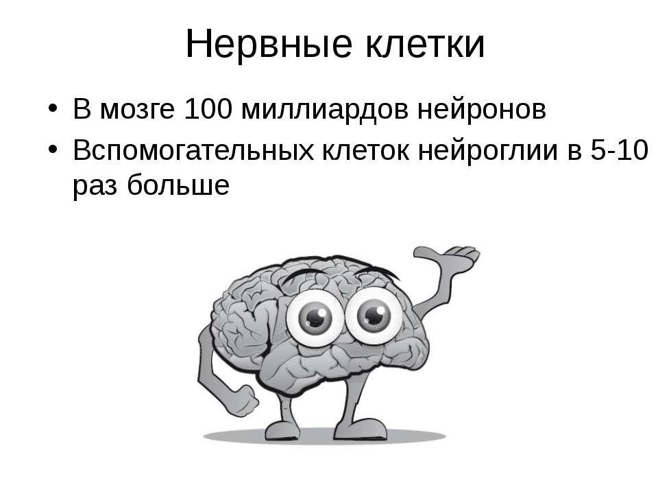 Нервные клетки В мозге 100 миллиардов нейронов Вспомогательных клеток нейрогл...