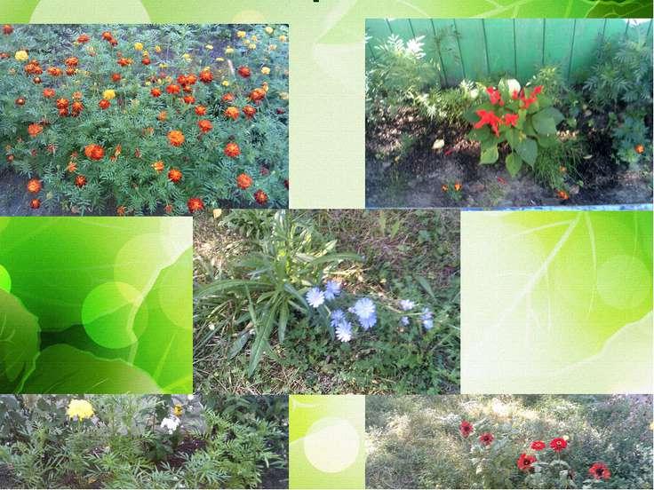 «Наш цветник»