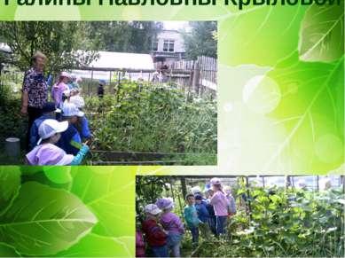 Экскурсия в огород Галины Павловны Крыловой