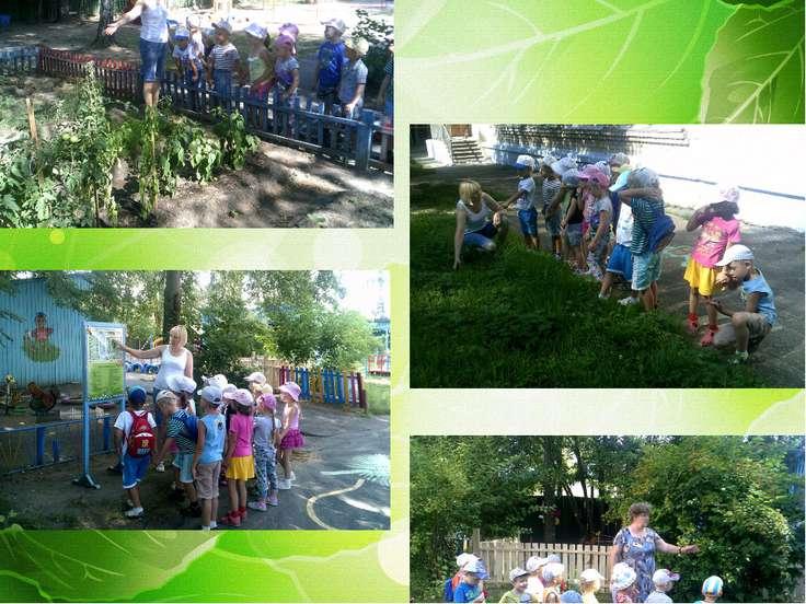 Экологическая тропа, день путешествия по детском саду