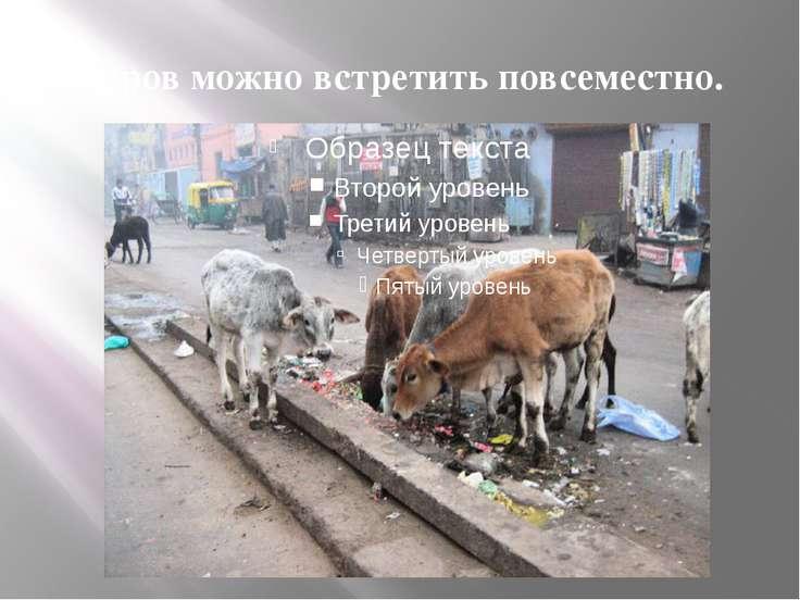 Коров можно встретить повсеместно.