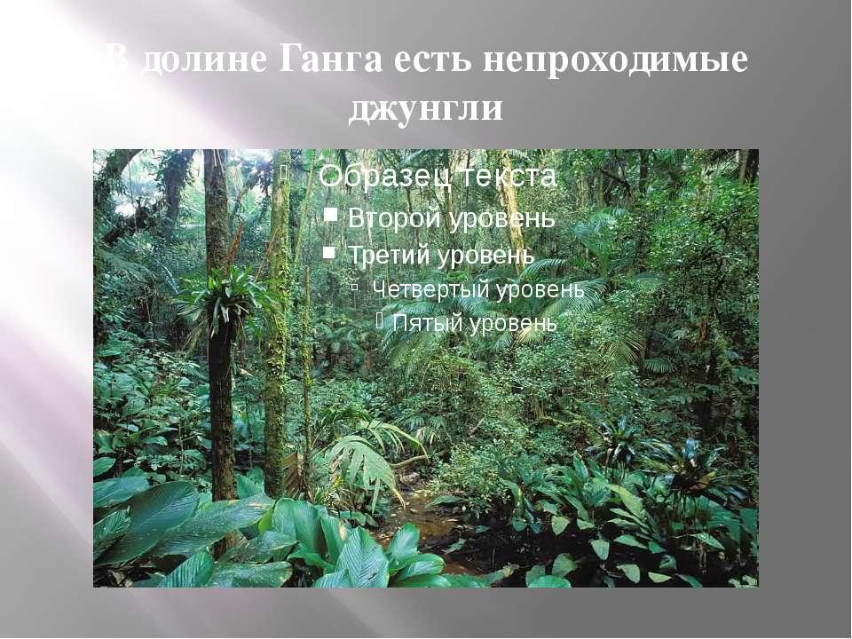 В долине Ганга есть непроходимые джунгли