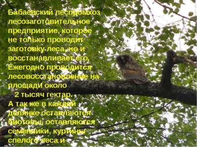 Бабаевский леспромхоз лесозаготовительное предприятие, которое не только пров...