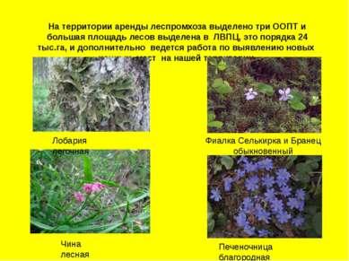 На территории аренды леспромхоза выделено три ООПТ и большая площадь лесов вы...