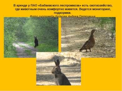 В аренде у ПАО «Бабаевского леспромхоза» есть охотхозяйство, где животным оче...