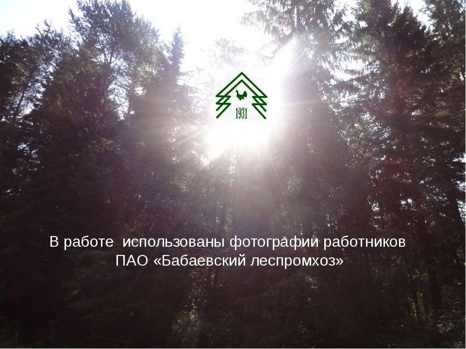 В работе использованы фотографии работников ПАО «Бабаевский леспромхоз»