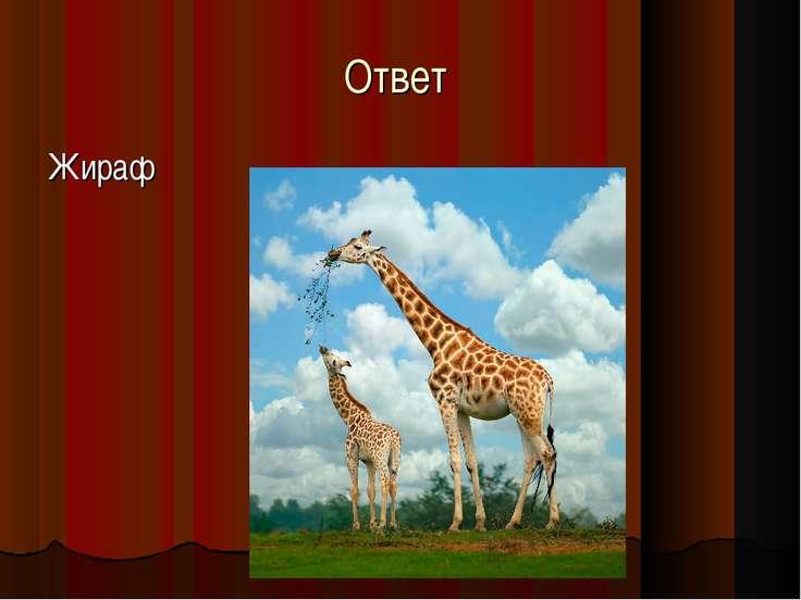 Ответ Жираф