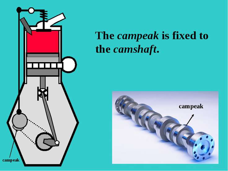 S The campeak is fixed to the camshaft. campeak campeak
