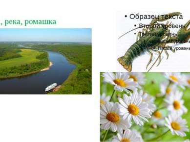 Рак, река, ромашка