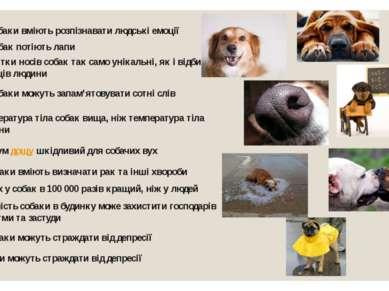 Собаки вміють розпізнавати людські емоції У собак потіють лапи Відбитки носів...