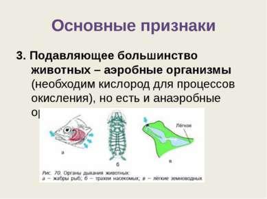 Основные признаки 3. Подавляющее большинство животных – аэробные организмы (н...