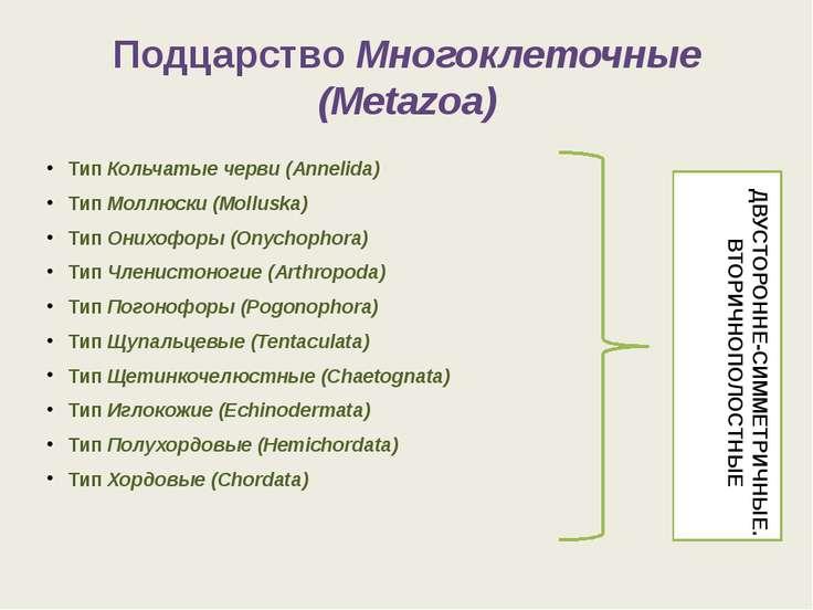 ПодцарствоМногоклеточные (Metazoa) ТипКольчатые черви (Annelida) ТипМоллюс...