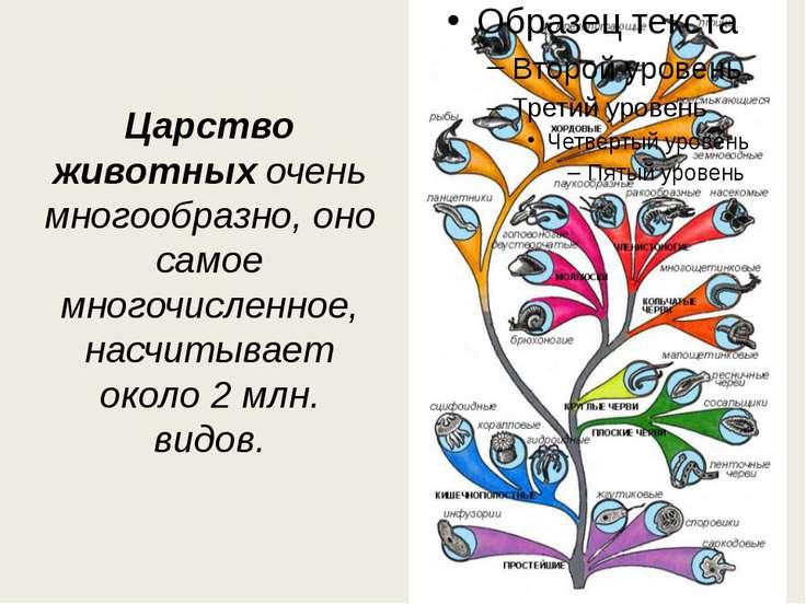 Царство животныхочень многообразно, оно самое многочисленное, насчитывает ок...