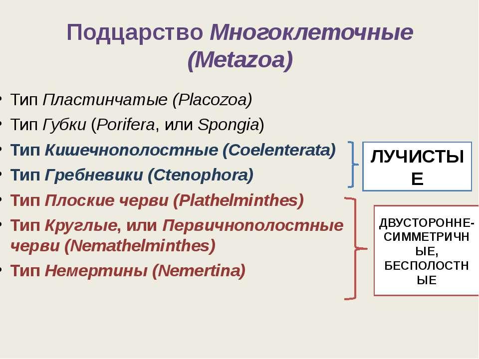 ПодцарствоМногоклеточные (Metazoa) ТипПластинчатые (Placozoa) ТипГубки(Po...