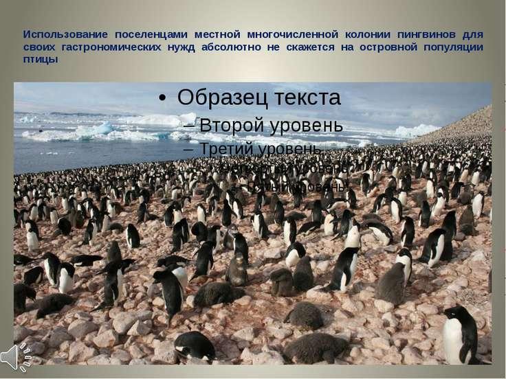 Использование поселенцами местной многочисленной колонии пингвинов для своих ...