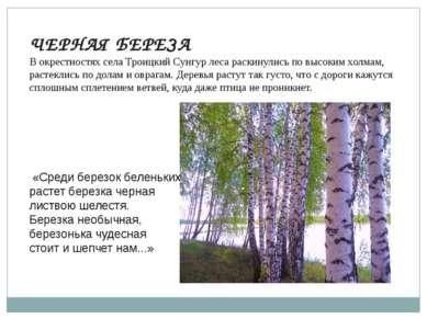 ЧЕРНАЯ БЕРЕЗА В окрестностях села Троицкий Сунгур леса раскинулись по высоким...