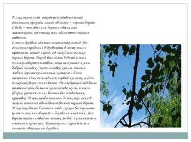 В лесу около села находится удивительный памятник природы нашей области – чер...