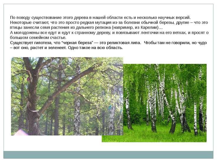 По поводу существование этого дерева в нашей области есть и несколько научных...